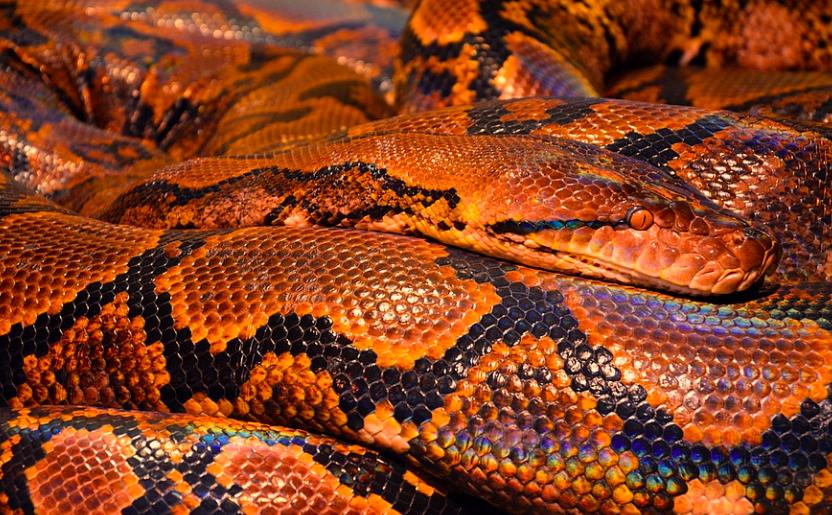 YouTuber・ヴァンゆん、ヘビを使ったドッキリ企画が大炎上「生き物で遊ぶな」「最低で最悪」
